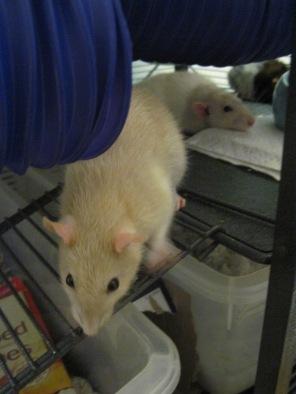 Kerrigan & Molly