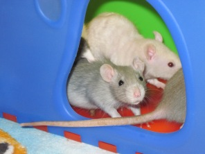 Eilir, Lux and Whiskey (Left to right)