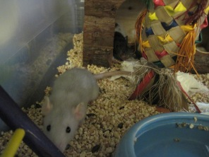 Sona on the left, and Seven hiding in the hut