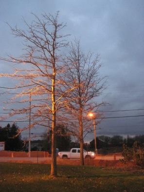 November Evening