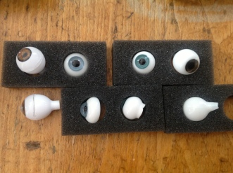 Side views, different types of eyes